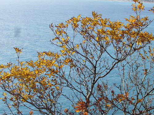 Autumn Sea, Photo by tadolo / flickr, some rights reserved